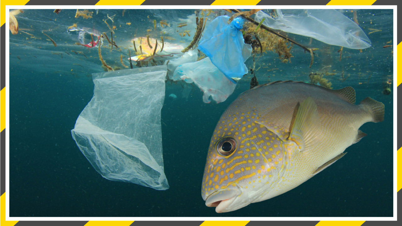 Fish-and-Water-Pollutions